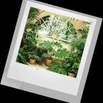 Комнатные растения в интерьере квартиры — реферат в качестве мини исследования