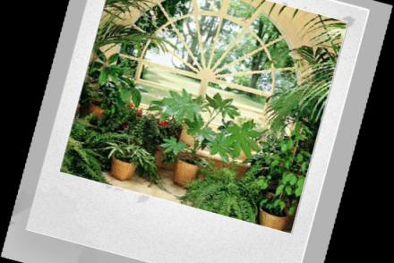 Правила размещения комнатных растений на определенном фоне